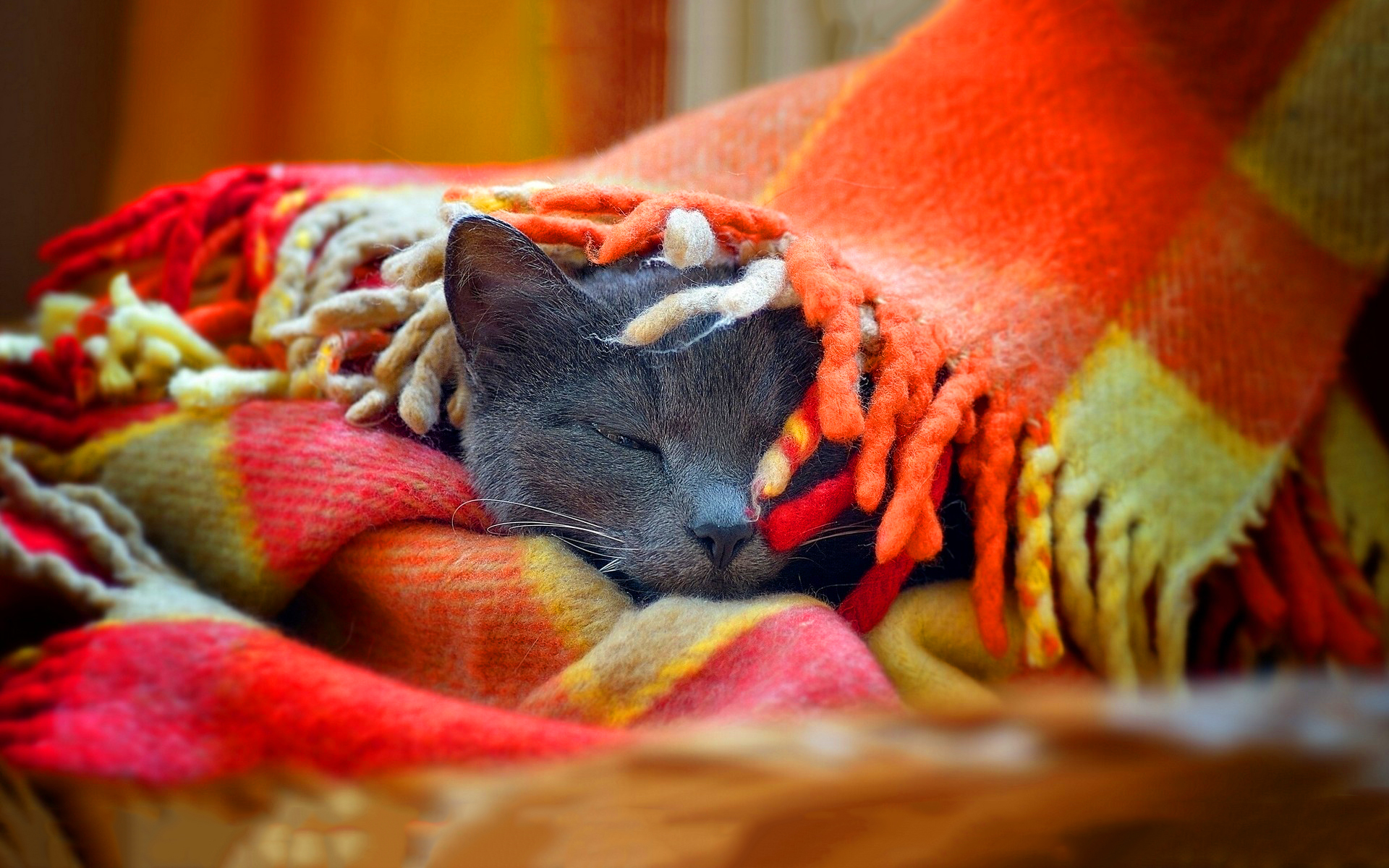 6929786_cat_sleep_blanket